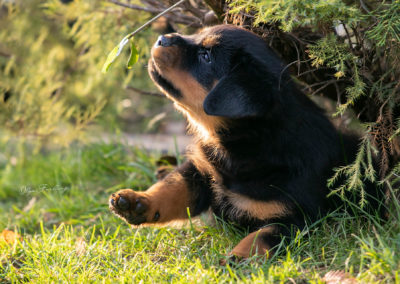Olga Forlicz Dog Photography