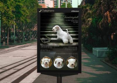 Olga Forlicz Ad Design