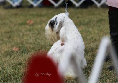 Olga Forlicz Dog Show Photography